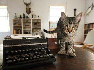 hems cat